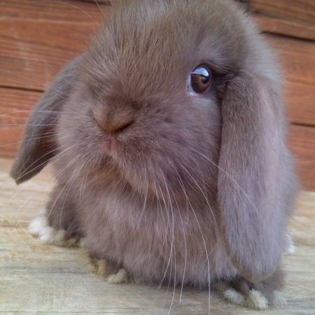Rabbit SEO Specialist